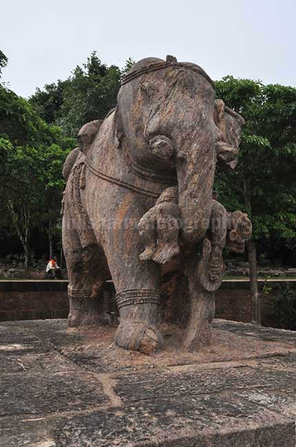 Monuments- Sun Temple Konark (Orissa) - Richly carved stone sculpture of an elephant holding his wounded master with his trunk at Konark Sun Temple near Bhubaneswar, Orissa, India. by Anil