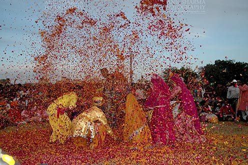 Festivals- Holi and Elephant Festival (Jaipur) - People celebrating Holi Festival with flowers at jaipur, Rajasthan (India). by Anil Sharma Fotography