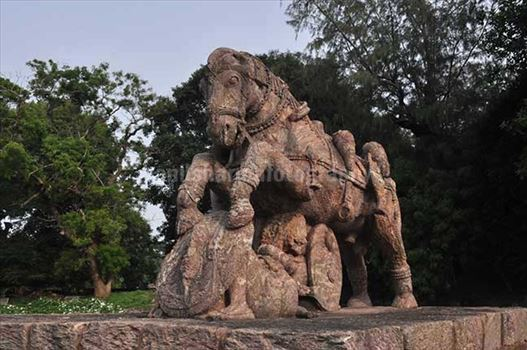 Richly carved sculpture of a War Horse protecting his master in battle field at Konark Sun Temple near Bhubaneswar, Orissa, India
