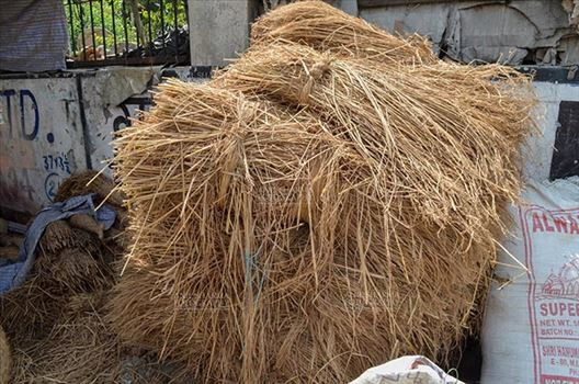 Durga Puja Festival, Noida, Uttar Pradesh, India- September 21, 2017: Wild grass or hay for Hindu Goddess Durga's idol sculpture at a workshop at Noida, Uttar Pradesh, India.