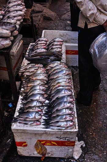 Religion- Dargah Sharif, Ajmer, Rajasthan (India) - Fish sold at shine market place of Ajmer Sharif Dargah the Mausoleum of Moinuddin Chishti, a sufi saint from India at Ajmer, Rajasthan, India.