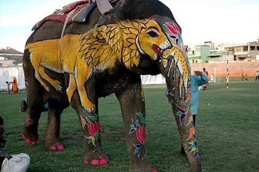 Festivals- Holi and Elephant Festival (Jaipur) - A decorate Elephant with owner at Holi and Elephant Festival at jaipur, Rajasthan (India).