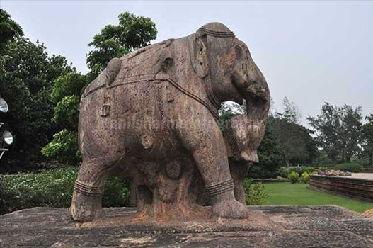 Richly carved stone sculpture of an elephant holding his wounded master with his trunk at Konark Sun Templenear Bhubaneswar, Orissa, India.