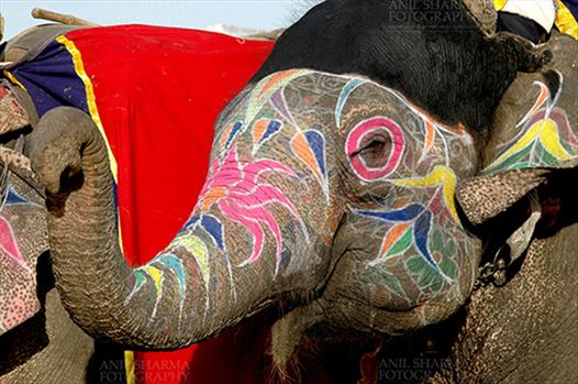 A decorated Elephant at Holi and Elephant Festival at jaipur, Rajasthan (India).