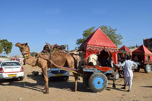 Pushkar, Rajasthan, India- January 16, 2018: Camel coach for tourists and devotees at Pushkar, Rajasthan, India.