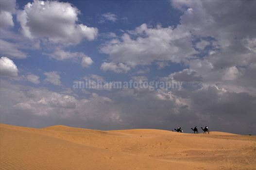 Festivals- Jaisalmer Desert Festival, Rajasthan - Beautiful Thar desert with blue sky.